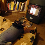 Dog Laying by Space Heater